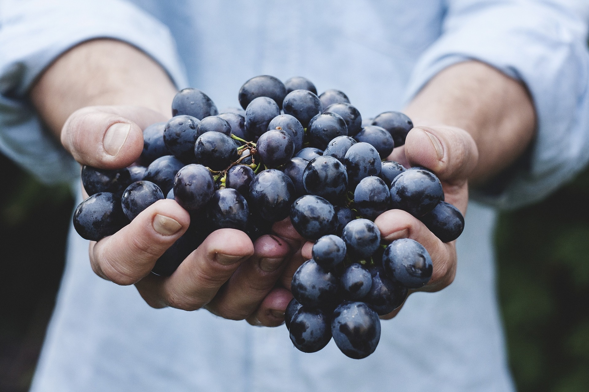grapes-690230_1920.jpg